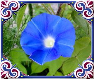 暇人が日記代わりに・・・・ 猛暑日が続いて給水が大変・・・・・  庭の花たちへの給水も大変だね・・・・  早朝の朝顔が魅力だね・