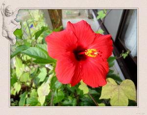 暇人が日記代わりに・・・・ 終日東風が吹き荒れ騒々しい一日・・・・・  庭の花には影響は無く一安心・・・・  ハイビスカスの赤が
