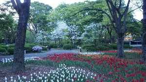 道の駅 車中泊とスタンプと・・・ 夕暮れの日比谷公園。手前にチューリップ、その先はツツジ、桜の様に見えるのはハナミズキ。春の歩みを感じ