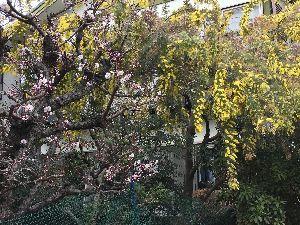 道の駅 車中泊とスタンプと・・・ 四国は箱庭みたい、花盛りきれいですね!