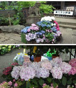 道の駅 車中泊とスタンプと・・・ 都流留です。昨日は、白山神社の紫陽花祭りを見て、それから秋葉原で旧友と暗くなる前...夏至直前なので