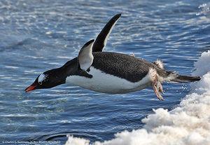 ぱんだちゃんの限界集落スレ 暑中見舞い  ペンギンさん(penguin)