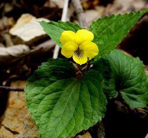 下手の横好き、一人きり 下条ダム周辺で見つけた花Ⅳ