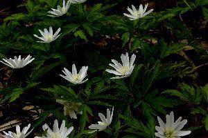下手の横好き、一人きり 下条ダム周辺で見つけた花Ⅵ