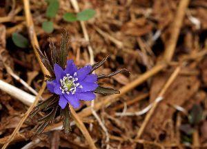 下手の横好き、一人きり 下条ダム周辺で見つけた花Ⅲ
