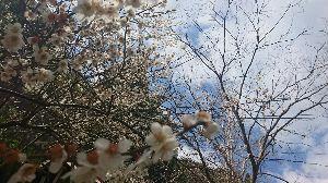 静岡でバイク乗り みなさん こんばんは(^-^)/ お天気が周期的に変わる時期になってきました。 お休みに雨があたらな
