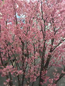1954年午年の人~~ こんにちは。 昨日 今日ととても良いお天気だけれど、花粉がかなり舞っているので、私は鼻水、クシャミと