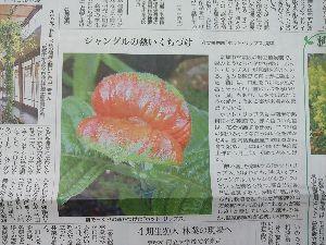 東男・京女 みなさん、こんばんは。 今日の京都新聞に植物園の「植物たより」で珍しい花が紹介されていました。 その