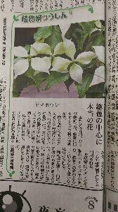 東男・京女 みなさん、こんばんは。 良い天気がつづいています。少しあついですが。 京都新聞の「植物園つうしん」に