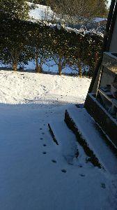 東男・京女 寒いですね  皆さんのところ 雪は?積もっていませんか お外には出られませんように