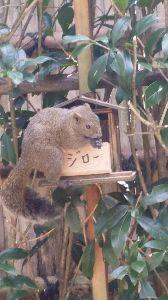 しりとり りす  鎌倉の明月院のりすです(^^)  次は「す」です