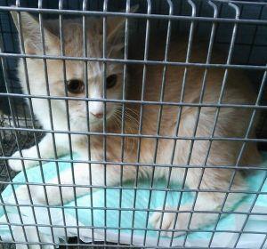 保健所は迷惑猫を処分してくれます これも メデタイです