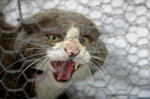 保健所は迷惑猫を処分してくれます メデタイ報告です