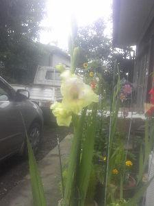 大同団結 今日は一日雨でした。(~_~;)  我が家ではダイコンとホウレンソウの耕が終わり、 連休中に種まきの