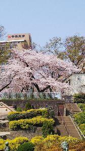 単車好きw おはようございますm(__)m  この数日、暖かいと言うより 暑いくらいですね。  会社の近くの桜が
