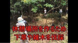 沖縄県 沖縄 辺野古のパヨクの『自然破壊』