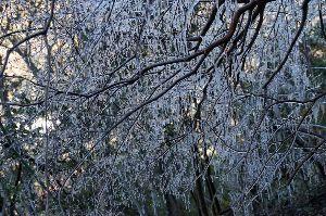六甲山 先日紹介したものです。 冬場限定です。  六甲山中は歩くたびに何かに遭遇します。 同じルートでも日ご