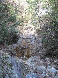 六甲山 kazu****さん、 摩耶東谷経由で森林植物園報告ありがとうございます。 小生、今週は寒すぎて冬眠