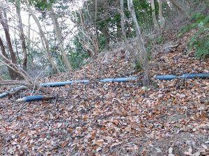 六甲山 本日の座頭谷へのついでに ナガモッコク尾根を覗いてきました。 添付写真のように全くつららはできてはい