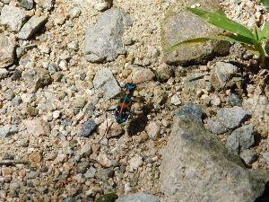 六甲山 こんな虫がいました。