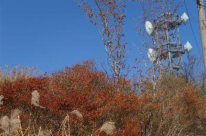 六甲山 今回のルート上の紅・黄葉 他です。 写真の腕が悪いので 実際に目で見た感じとは違います。  http