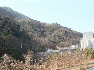 六甲山 タマミズキは冬の華ですね。 冬枯れの中で赤い色が目立ちすぐに見つけられます。 ところでどのあたりにあ