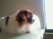 愛犬の死 僕も昨日愛犬ラッキーが旅立ちました。 一昨日の夜に少し苦しそうにしてたので背中とか撫ぜてあげたら少し