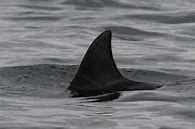 4824 - (株)メディアシーク 現状はコンナ漢字 サメなのかイルカなのか良く見極めましょう