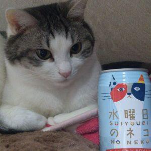6636 - (株)ソルガム・ジャパン・ホールディングス ビールでも飲んで寝るにゃ~www