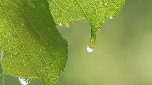 新・詩、随筆、小説などを楽しみたくて * April Rain *   Rain grows flowers.  Don't y