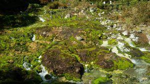 群馬周辺の山と名湯 はなさん 東北あいにくの天気になり、残念でした。 芳ケ平のナナカマドは、例年より紅葉が早くて、見頃か