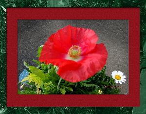 趣味で撮った写真に短い言葉つけるの楽しいよ 今日も気温が上がり四月の陽気に・・・  それにしても寒暖の差がすごいね・・・  庭の花も強い日差しを