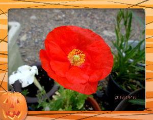 趣味で撮った写真に短い言葉つけるの楽しいよ 朝から気温も高くとうとう夏日に・・・  道行く人は殆んど半袖スタイル・・・  庭の花も賑やかに咲き出