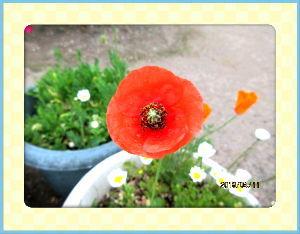 趣味で撮った写真に短い言葉つけるの楽しいよ 終日不安定な天気でしたね・・・  陽射しが無いので気温も上がらず小寒い・・・  庭の花は変わらず元気