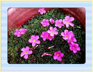 趣味で撮った写真に短い言葉つけるの楽しいよ 何時の間にか陽射しが射し始めて  日中はポカポカ陽気に・・・  庭の花も元気に咲き出したね・・・