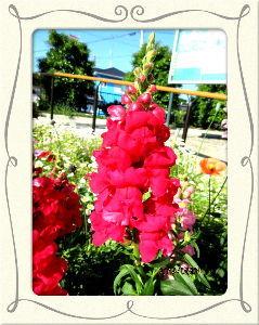 趣味で撮った写真に短い言葉つけるの楽しいよ 今朝は異常なほど風が冷たい・・・  日中になっても気温が上がらず小寒い感じ・・・  庭の花たちには影