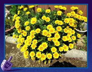 趣味で撮った写真に短い言葉つけるの楽しいよ  陽射しが強いので気温も上がりましたが  吹き抜ける風が爽やかで心地よい初夏の陽気・・・  庭の花も