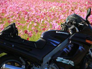 楽しいバイク♪ 今日は 秋の気配を 肌で感じて 走ってきました  コスモスが満開ですね