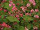 楽しいバイク♪ こんばんは ここは 福岡県宮若市磯光にある そば畑です 日本では珍しい赤いそばの花が辺り一面花をつけ