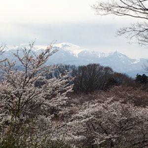 なにもない 雪割草・・・・ミスミソウっても言う? 友人からはミスミソウって聞きます 花見山にもあるけど足元で咲い