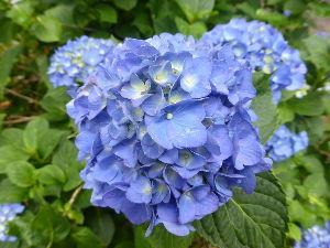 人生みちづれ ( ノ゚Д゚)おはようございます。 今朝の当地は、☀強い日差しがー早朝から照り付けてます 沖縄では、