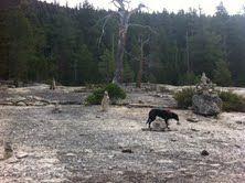 ひとり暮らし、楽しく生きるために 先日、シエラの山にハイキングした時も、 氷河時代に重い氷の川に滑ベリ削り取られた一面一枚岩盤を登りな