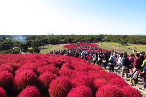 ☆北海道限定ドライブの旅☆ 全国的に晴れの予報だった21日に茨城県の 国設ひたち海浜公園まで行って来ました 春のネモフィラと秋の