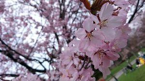 ☆北海道限定ドライブの旅☆ こちらもすっかりご無沙汰してます。  3月後半は温かく雪解けが進み『積雪ゼロ』も例年より早かった札幌