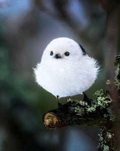 8789 - フィンテック グローバル(株) >フィンランドの写真家が森の中で捉えた、美しい野鳥の姿  飯能市宮沢湖周辺のメッツァビレッジでもこん