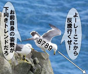 8789 - フィンテック グローバル(株) 「かもめ」と言うより 葱しょった「鴨め!」やな。