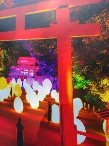 8789 - フィンテック グローバル(株) 今朝も、涼しい😍いつもの散歩で、宝船へ行き帰りにフィン玉祭りをやっている下鴨神社によりあホルダーの皆