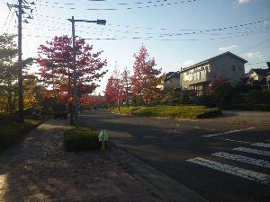 65歳 同級生! お友達なりませんか?  仙台では種類によっては、既に紅葉というより、落葉寸前(写真参照)のものもあります。
