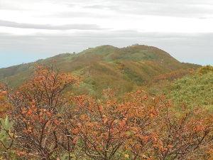 平川山岳会 紅葉の季節 白神岳頂上付近は色づいてます。