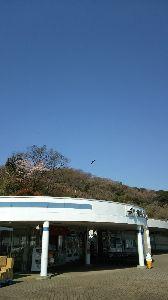 いつまでも☆と・き・め・き・を☆ 今日の横須賀パーキングエリア  トンビがくるりと 輪をかいて  いました